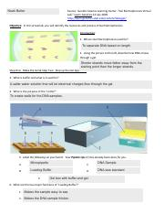 Gel Electrophoresis Virtual Lab Worksheet - Nidecmege