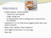 Ch._7_rodents_ferrets_and_lagomorphs_part_2