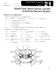 spinal cord worksheet the large and most comprehensive worksheets. Black Bedroom Furniture Sets. Home Design Ideas