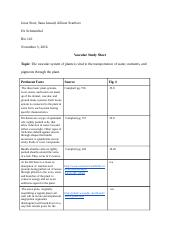 Vascular Structure Worksheet
