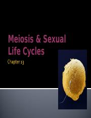 Chapter 13 Meiosis