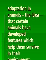 Adaptation in animals2.ppt