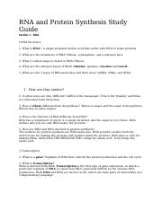 RNA and Protein Synthesis Study Guide.docx