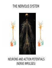 33_INTERNAL_COMMUNICATION_NEURONS_OUTLINE(2).ppt