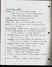 Muscle System Notes