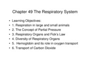 Chapter 49 The Respiratory System 2011
