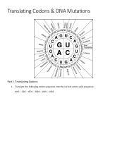 Codon Worksheet & Key.pdf - Translating Codons DNA Mutations ...