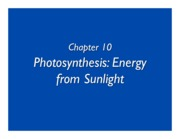 Chapt10_Photosynthesis.ppt