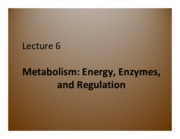 Lecture 6 - Metabolism Energy, Enzymes, and Regulation