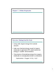 Lectures 11  12 - Cellular Respiration.pdf