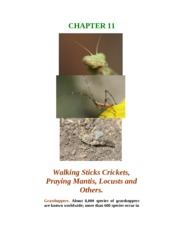 Chapter 11. Walkingstick, Grasshoppers and Others.
