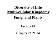 Lecture #9 Fungi and Plants