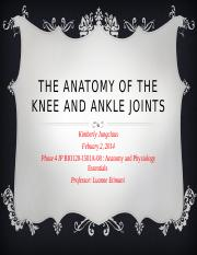 phase 4 ip  final The Anatomy of the Knee and Ankle Joints