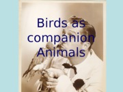 birds_as_companion_animals_for_Angel
