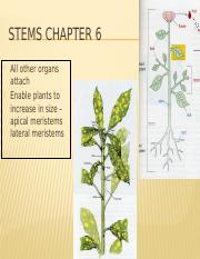 Chapter 6 stems