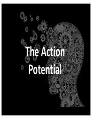 Understanding the Action Potential.pdf
