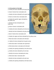 SKULL EXAMPLE PRACTICAL