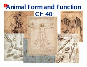 Ch 40 - animal form and function (1 slide per page) (1)