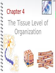 Chapter 4 Tissues
