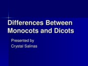 Monocots and Dicots
