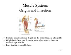MUSCULAR_SYSTEM(1).pdf