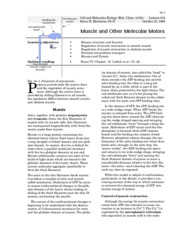 muscle and other molecular motors