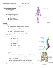 Skeletal System - Axial and Appendicular Outline.doc