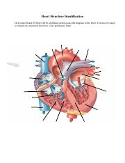 Heart Structure Identification Unlabeled.pdf