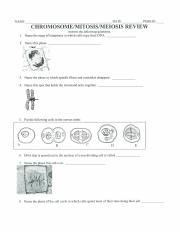 Mitosis Meiosis Homework- Chapter 5.docx - Name ...
