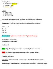 Carbohydrate notes (Repaired).docx