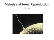 Ch 12 Meiosis and Sexual Reproduction