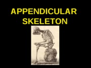 ANP 300 - Lecture 5 - Appendicular Skeleton