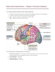 Brain and Cranial Nerves – Chapter 15 Human Anatomy.docx
