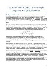 Lab 6 Simple stains.pdf