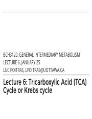 6 - TCA:Kreb's Cycle