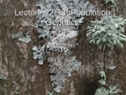 Lecture 12_13_Population_Genetics_NOTES