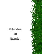Photosynthesis__Cellular_Respiration__Fermentation.ppt