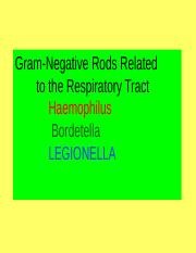 19. GNB of respiratory tract