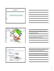 Chapter 6-Cellular Respiration.pdf