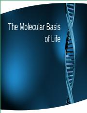 Lecture 5.1 - DNA Molecular Basis of Life & Replication