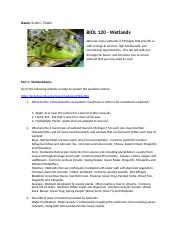 Wetlands Lab.doc