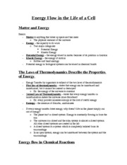 Cellular Energy Notes