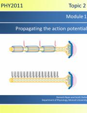 Topic-2-Module-3-Propagating-the-Action-Potential.pdf