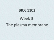 Week 03 Cell membrane colour
