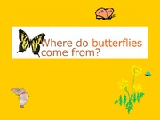 butterflies_and_frogs