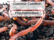 Coelemic Conditions