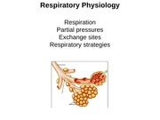 BISC 305 - Lecture 13 (Respiratory System 1)