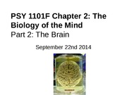 Chapter 2 Biology of the Mind - Part 2 PowerPoint