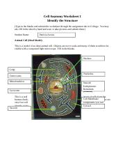 cellanatomyworksheet1