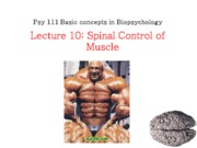F10_L10_spinal_motor
